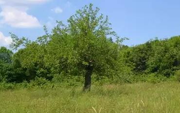 drzewa po niemiecku